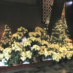Sanctuary with White Poinsettias