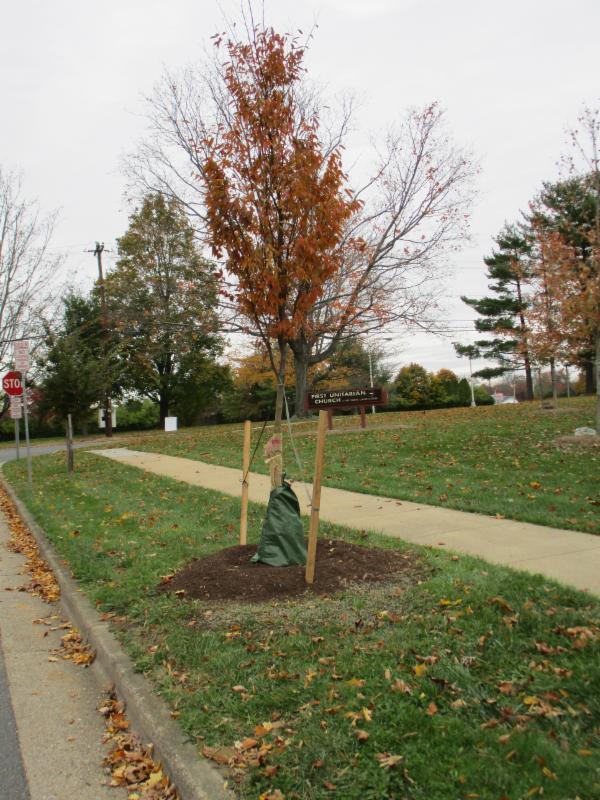 new trees 2017