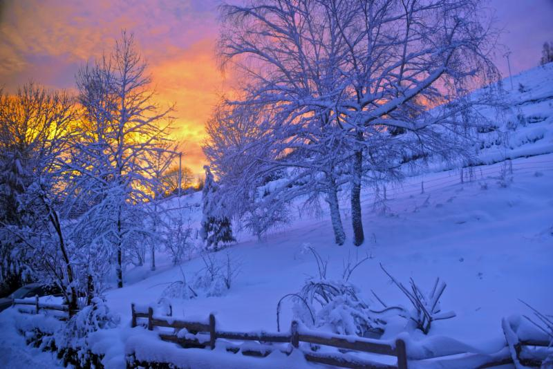 winter sunset and trees